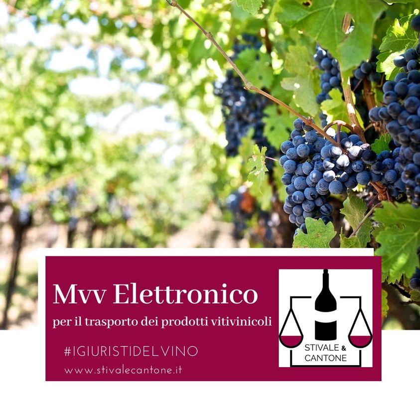 MVV Elettronico: la normativa